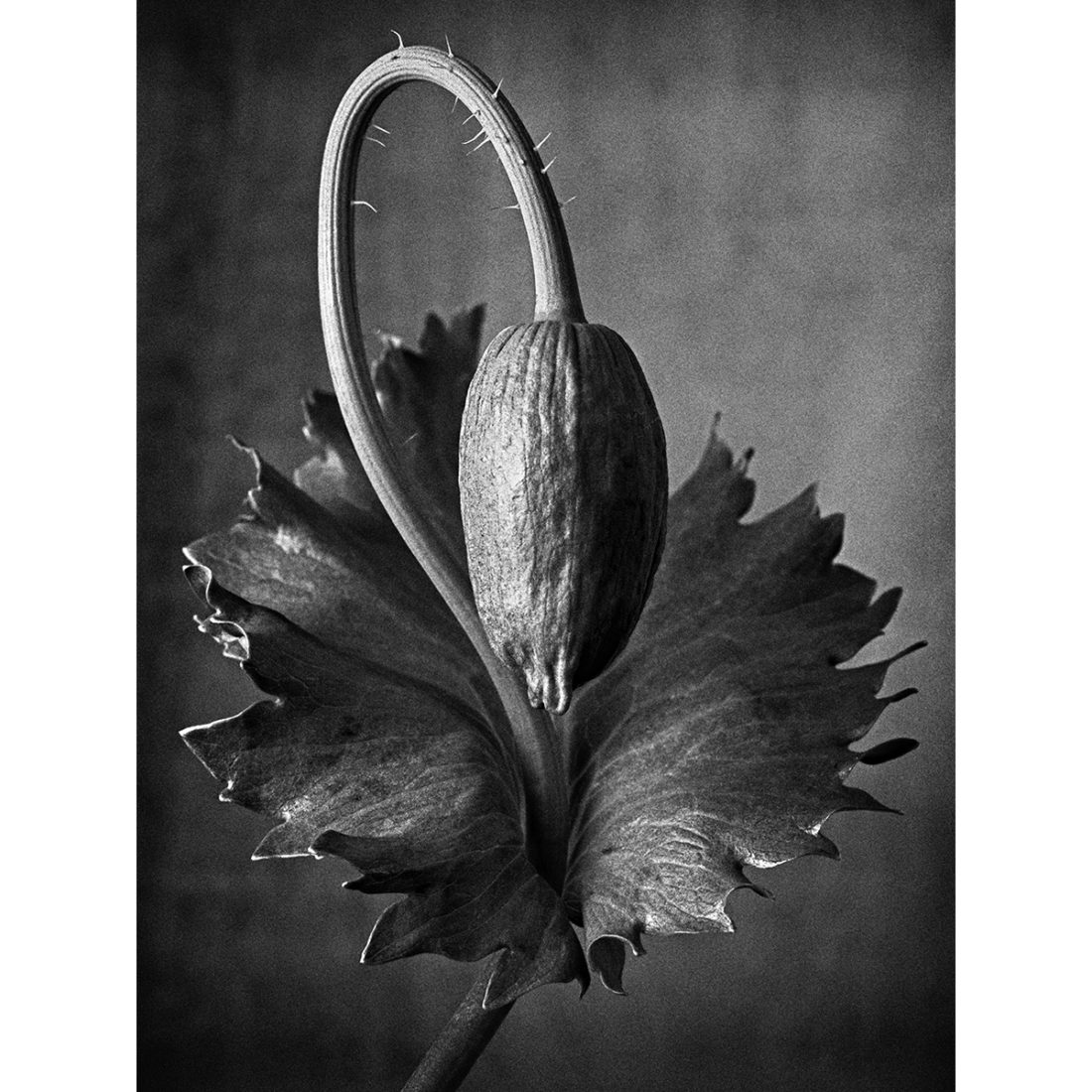 Botanic #06