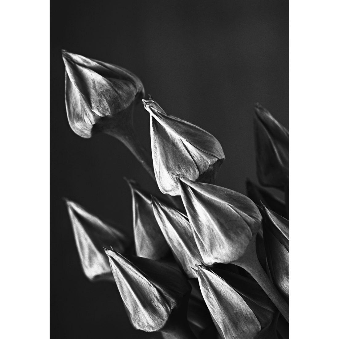Botanic #09